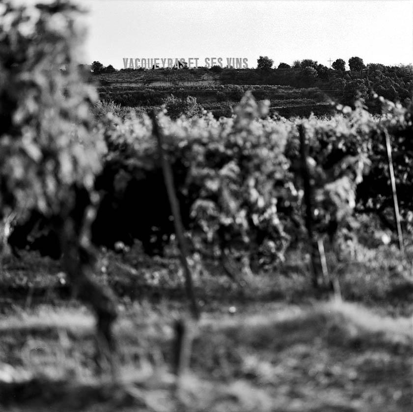 vins de vacqueyras