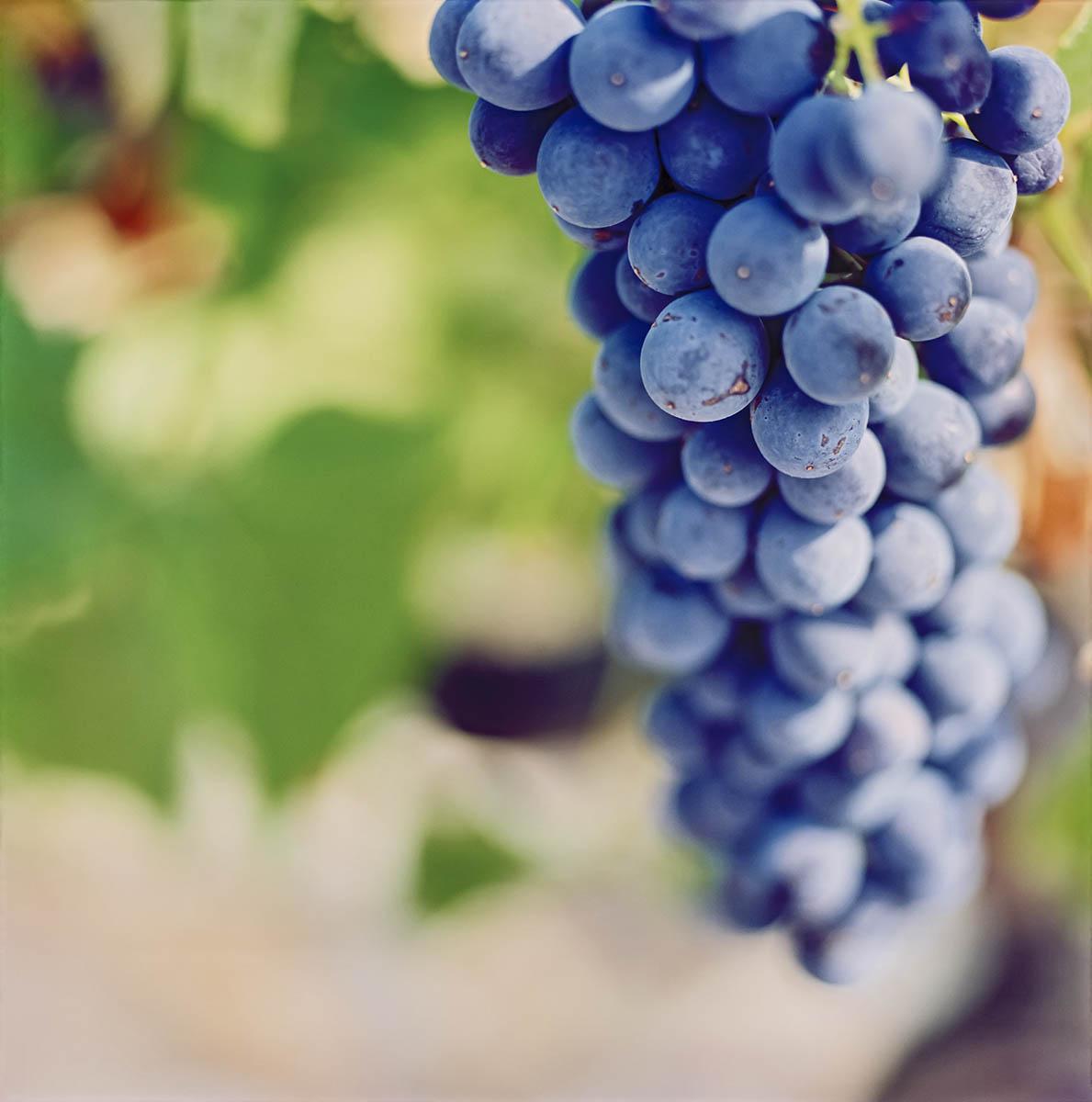raisins vacqueyras