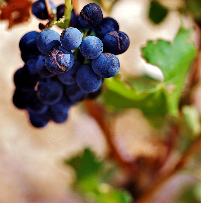 grape bleu